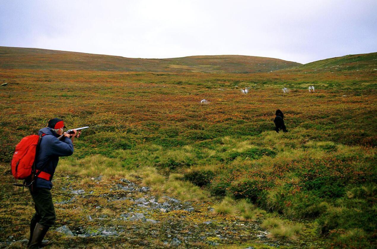Har folk i Kirkenes opparbeidet rett til jakt i Alta? Kommentatoren tviler. Foto: Bjarne Riesto.