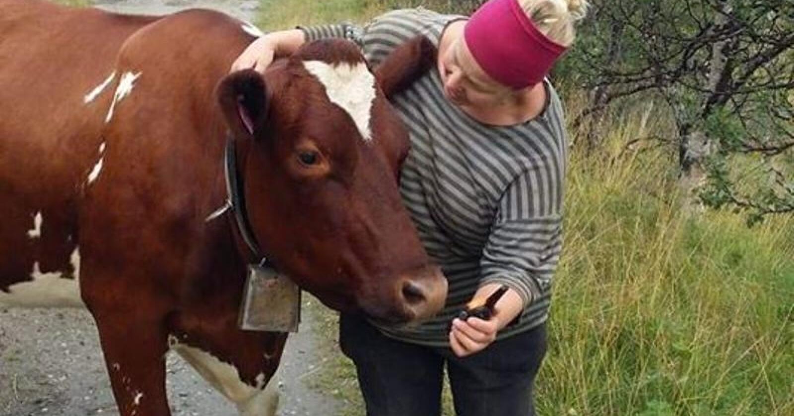 Tøft valg: I mange måneder orket ikke Kari Marit snakke om at hun skulle avvikle melkeproduksjonen, fordi tårene kom. Nå har hun tro på et godt liv som ammekuprodusent. Foto: Privat
