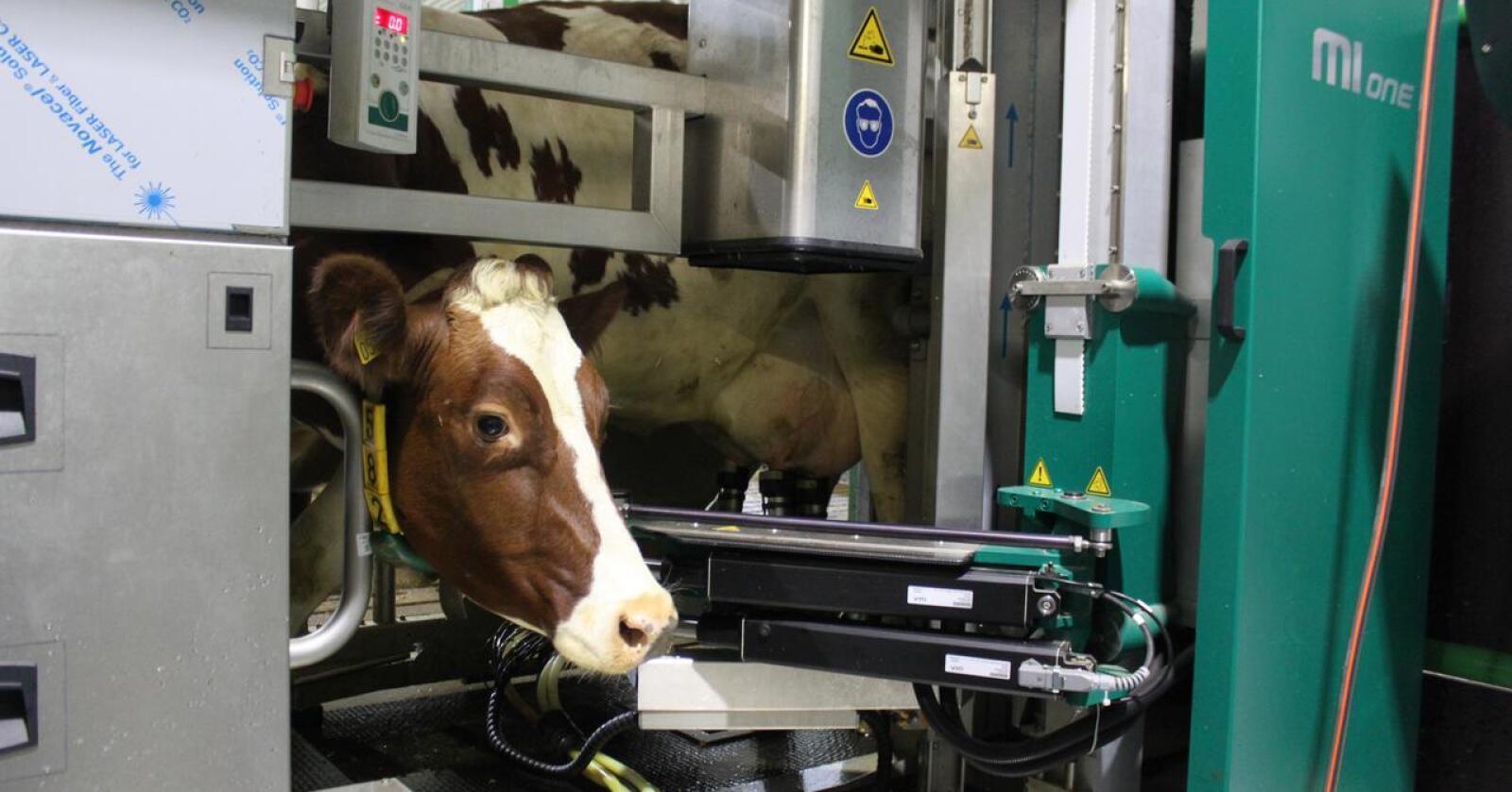 NY IMPORTØR: Islandske Lifland overtar salg og service av GEA sine produkter i Norge når Reime Landteknikk gir seg. Arkivfoto: Norsk Landbruk