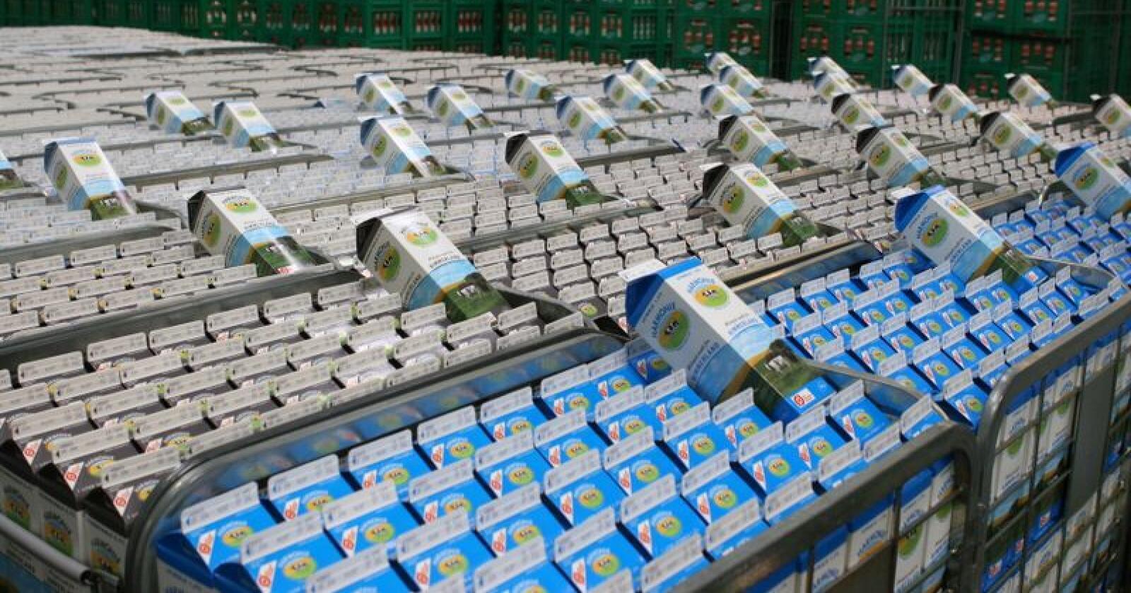 Arla vil ha all dansk melk over på en GMO-fri ordning i 2021. Her sees økomelk i Danmark. Foto. Arla Foods
