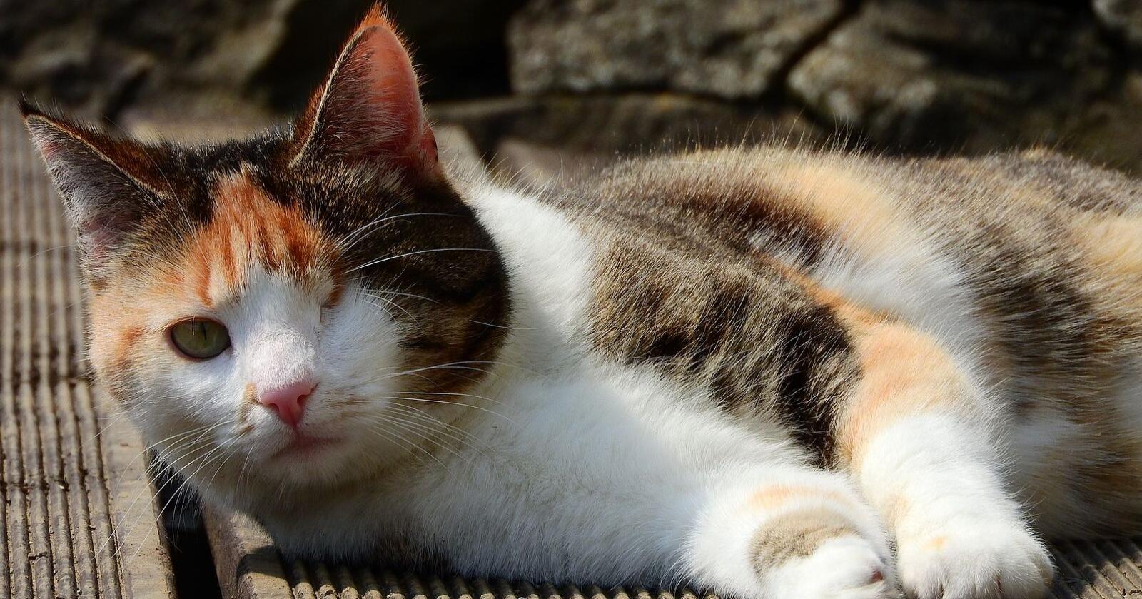 En bot er ikke nok når umerka feller plasseres slik at tamme dyr skades og drepes, skriver Jenny Rolness. (Illustrasjonsfoto: Pixabay)