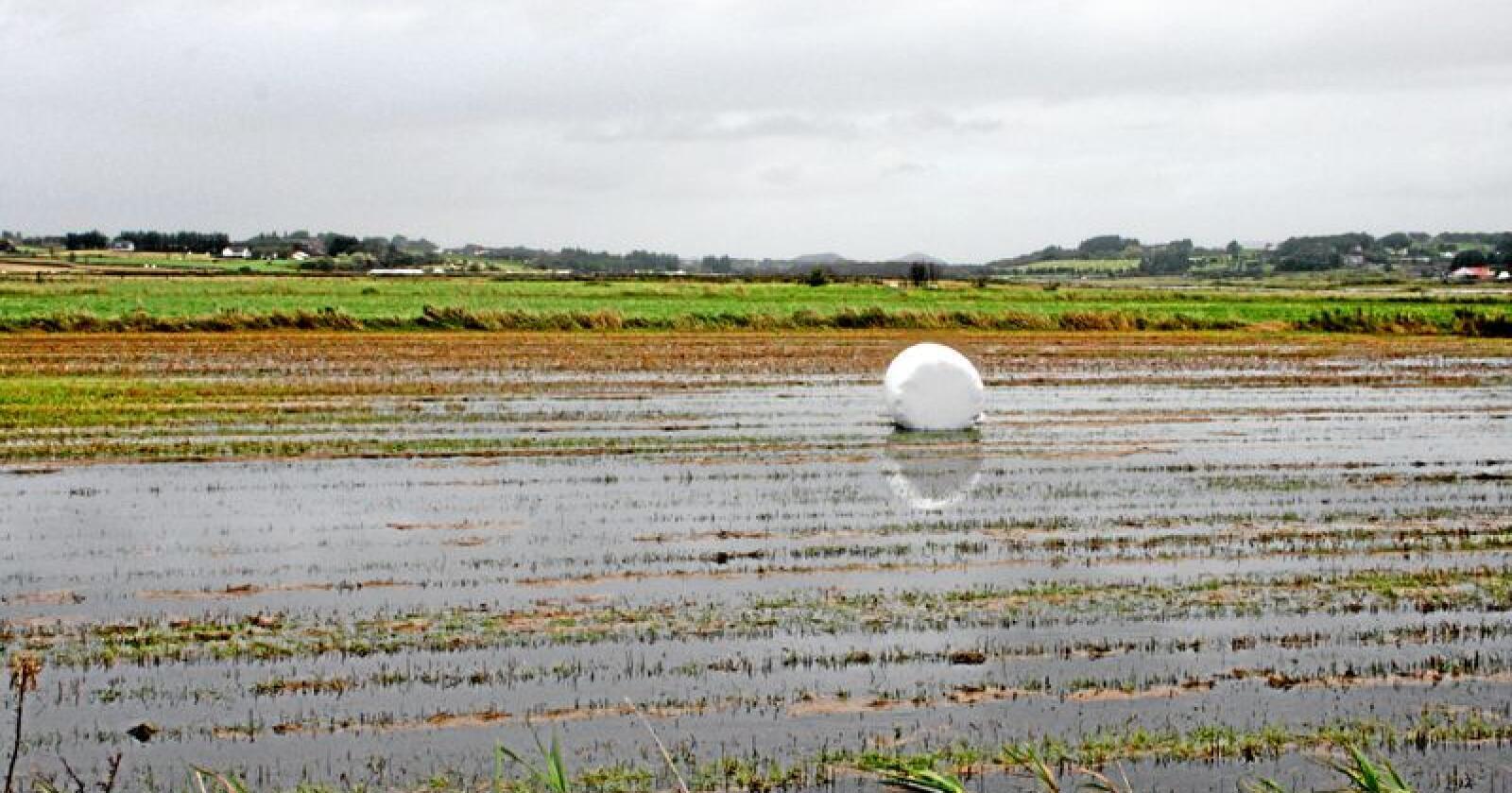 Nye tider: Klimaet endres, landbruket må endres. Foto: Bjarne B. Aase