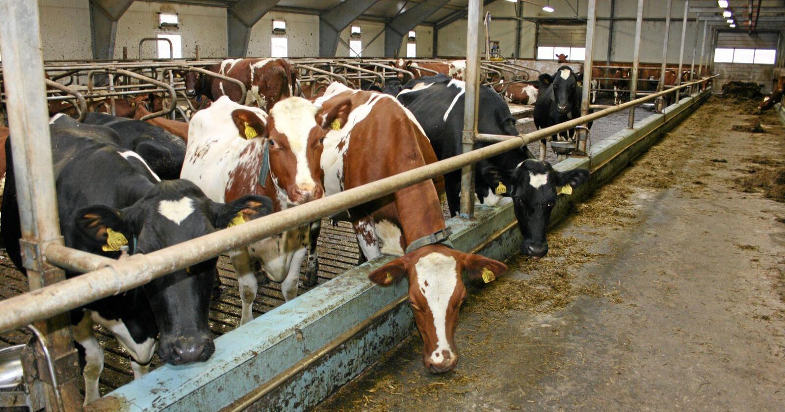 Kvotestrid: Prisen og reglane knytt til mjølkekvotar har skapt debatt her i landet siste åra. Bondelaget kjem nå med ei liste over tiltak. Foto: Bjarne Bekkeheien Aase