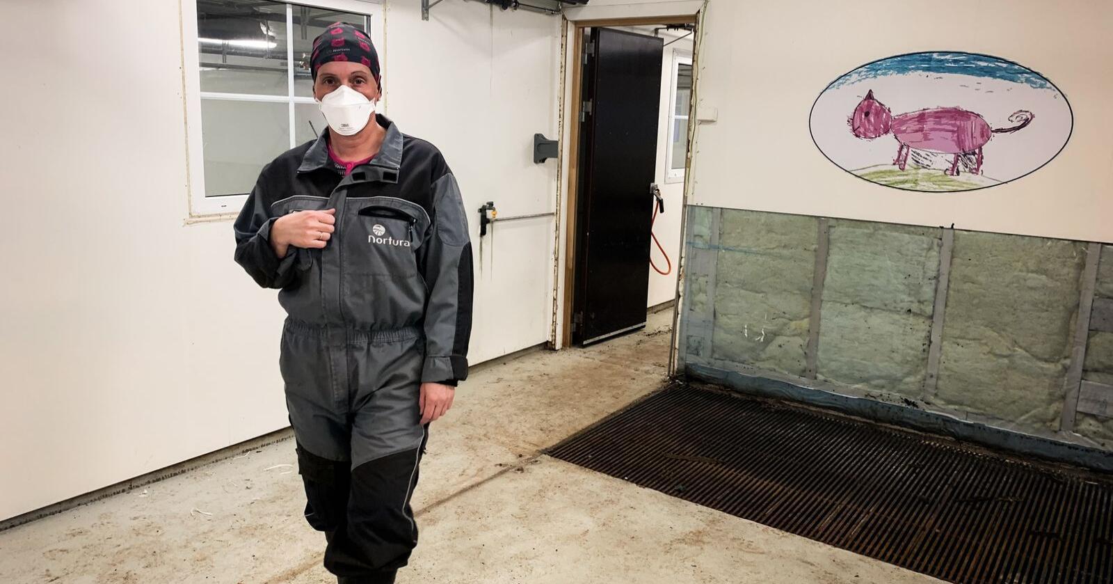Bente Risholm Børsheim sanerer grisehuset på Vega i Nordland. Å rive deler av veggen, er bare noe av det som må gjøres for å bli kvitt smitten. Foto: Lena Rakvaag