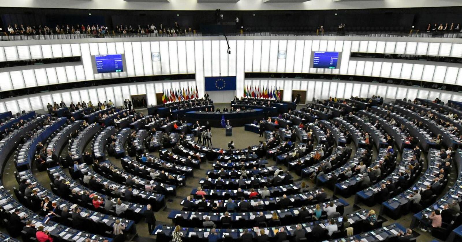 558 av 680 parlamentarikere i EU-Parlamentet stemte torsdag for borgerforslaget om å gjøre burhold forbudt i en rekke produksjoner i EU. Foto: Mauro Bottaro