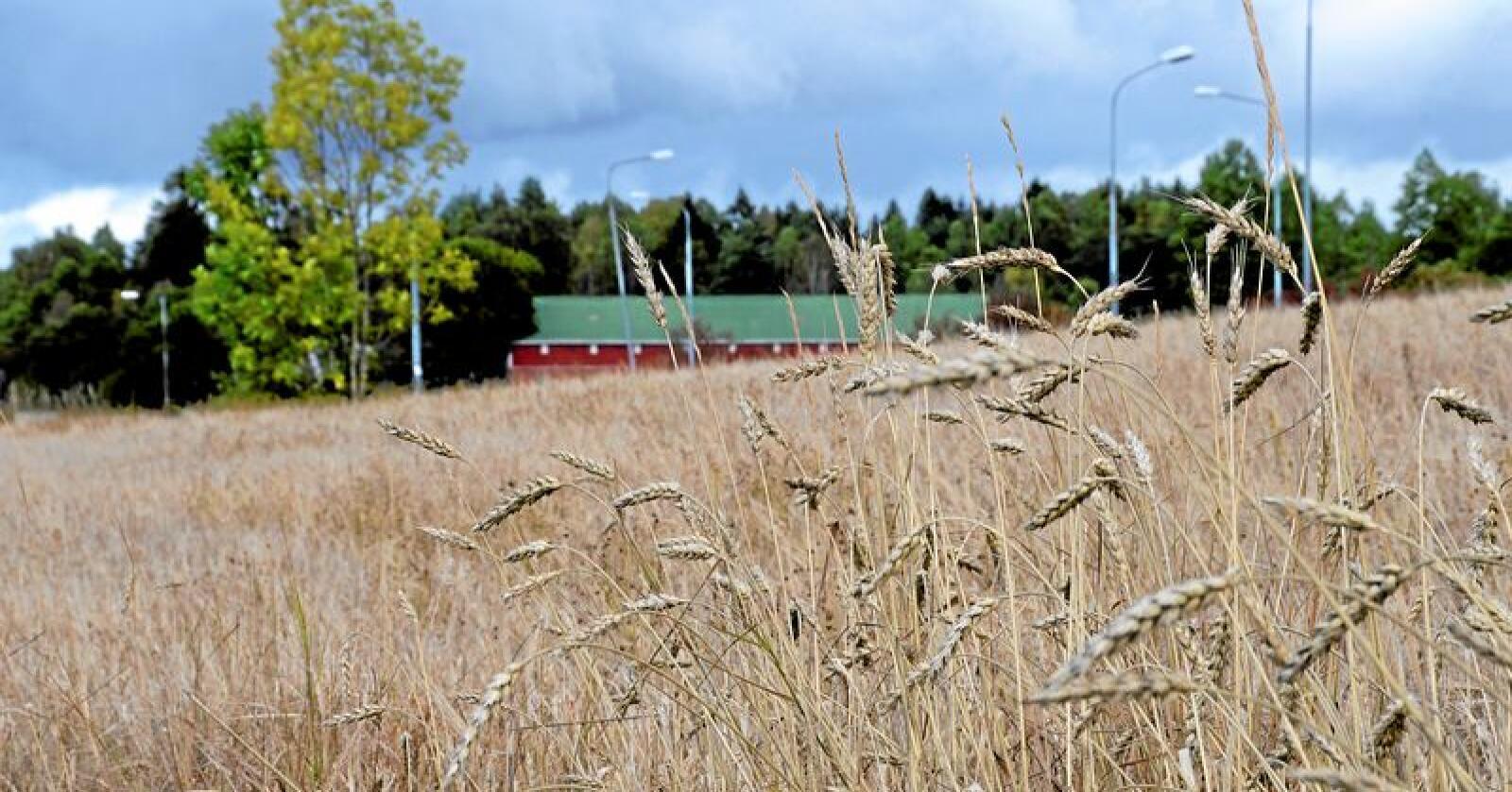 Kun tre prosent av landets areal kan brukes til planteproduksjon. Foto: Mariann Tvete
