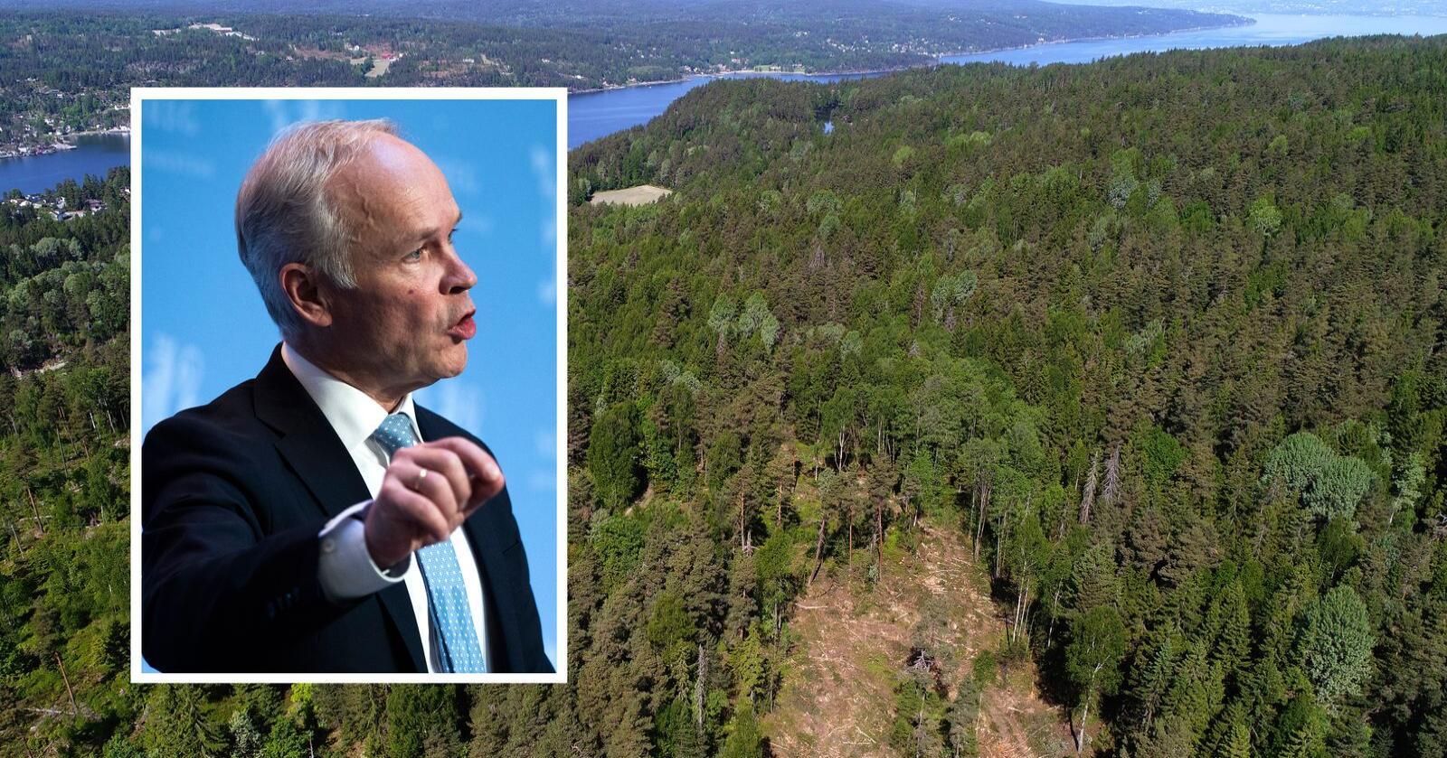 Jan Tore Sanner sier norske myndigheter ønsker at skogbruket skal klassifiseres som bærekraftig etter eksisterende kriterier. Foto: Cornelius Poppe og Berit Roald / NTB