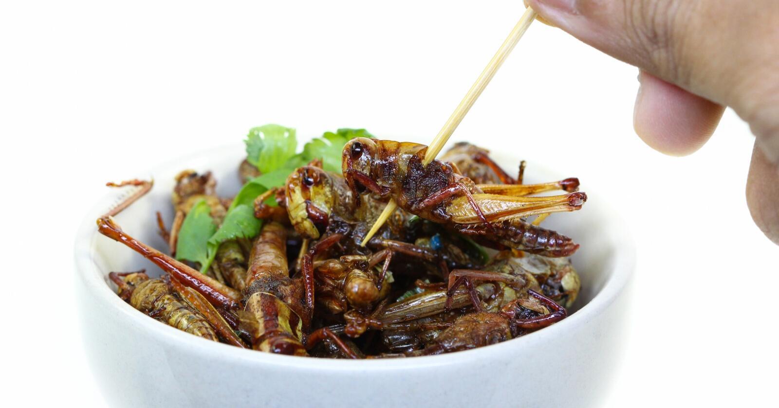 Friterte insekter har lenge vært en delikatesse flere steder i verden, spesielt i Asia. Nå kan insekter blitt et enda mer vanlig syn i frysedisken i mange butikker også i europeiske land. Foto: Napat Polchoke/Mostphotos