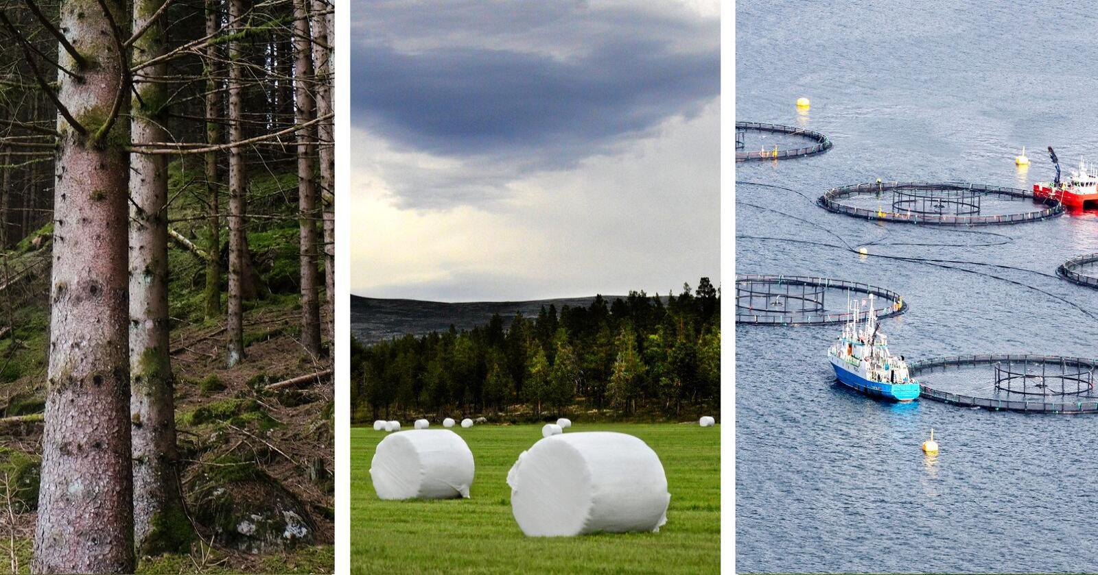 NHO og flere andre organisasjoner har i en rapport pekt på store muligheter for sysselsetting innen de biobaserte næringene. Foto: Siri Juell Rasmussen