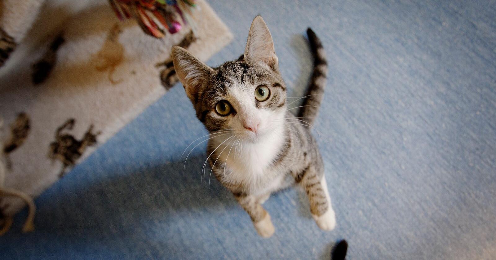 Flest katter fikk hjelp fra Dyrebeskyttelsen i 2019. Foto: Linn Cathrin Olsen / NTB scanpix