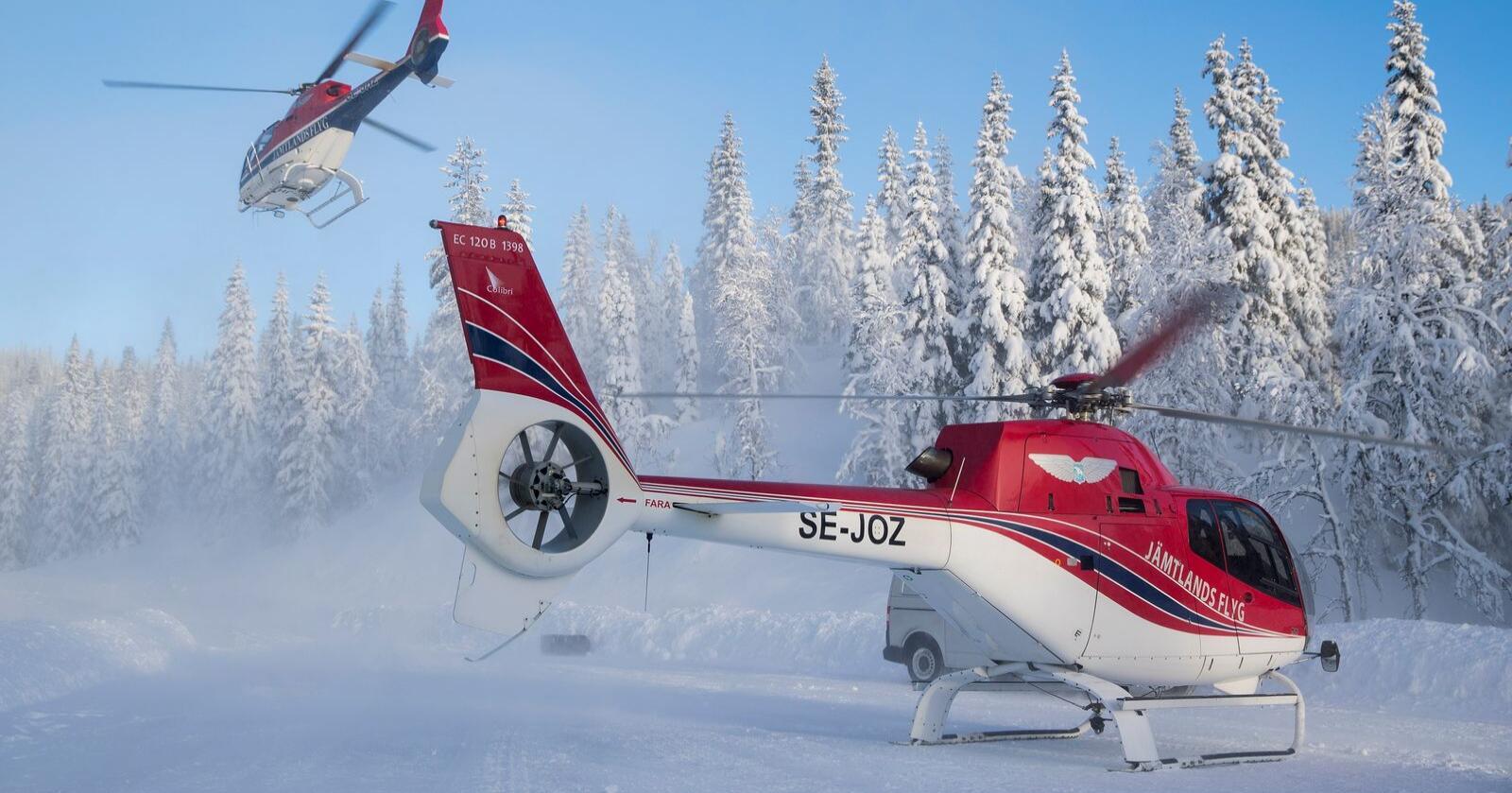 Tall fra Klima- og miljødepartementet viser at det har blitt brukt nesten 12 millioner kroner på helikopter for å ta ut store rovdyr i Norge de siste fem årene. Foto: Tore Meek/NTB