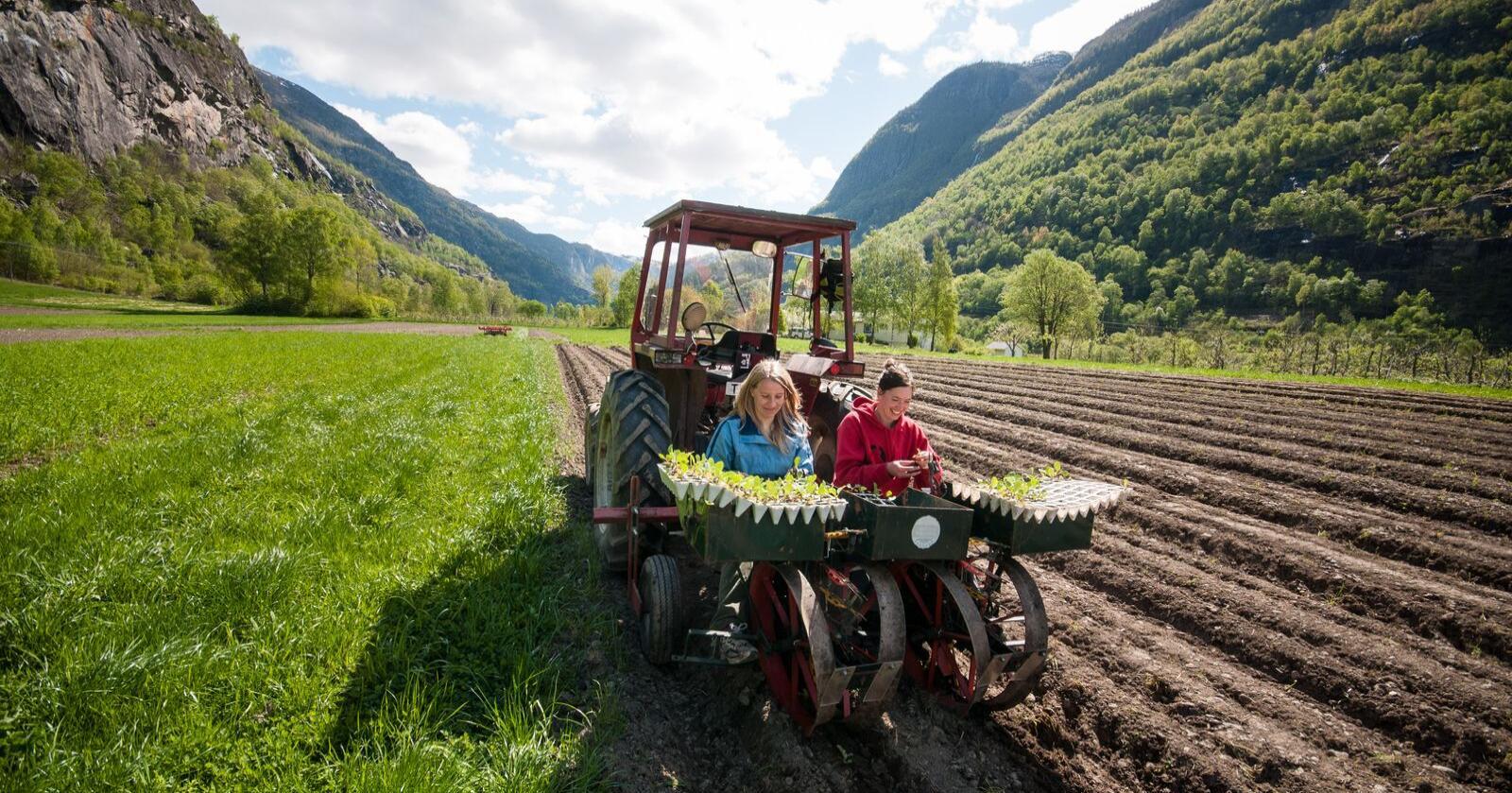 Forskjell: I Norge er 4,2 prosent av jordbruksarealet økologisk. I Sverige er andelen 20,4 prosent. Nå skal utviklingen være etterspørselsdrevet. Bildet er fra Aurland. Foto: Tom Boersma