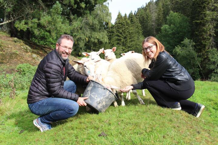 BEDRE HVERDAG: Ragnar og Anita Ørdal er opptatte av å forvalte beiteressursene og kulturlandskapet de har til rådighet. Nå sikrer Nofence at ikke all ledig fritid går til den viktige jobben.