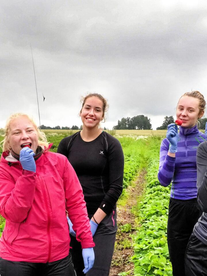 Fra venstre står Hannah Dæhlin, Nora Luiza Monsen, Karen Plukkerud og Tonje Katrin Bakken. Alle liker jorbær, bortsett fra Nora. -Når noen spør om bærene er gode svarer jeg at de nok må smake selv. Jeg har ikke peiling. Foto: Siri Juell Rasmussen.
