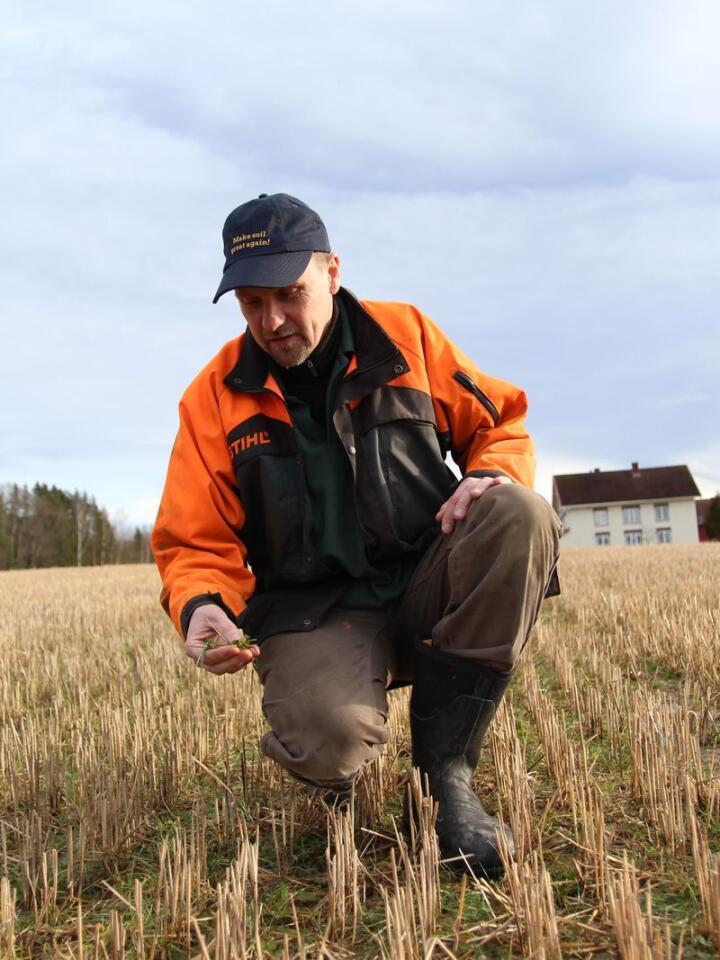 VIKTIG FOR JORDHELSA: Hellek Berge er veldig opptatt av å ha planter i jorda året rundt og bruker gjerne raigras og kløver som dekkvekst.