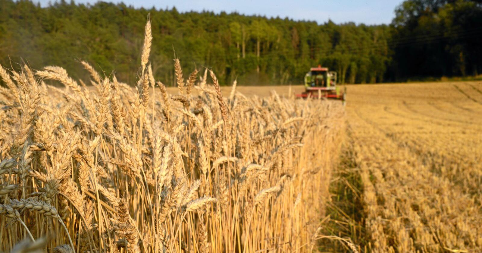 Felleskjøpet Agri har fått 10,2 millioner til et kornprosjekt. Foto: Mariann Tvete