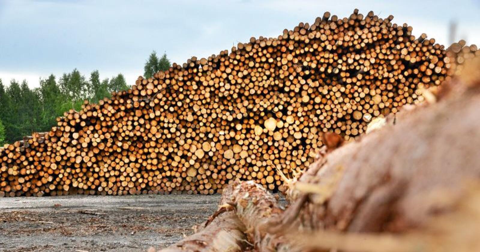 Tømmertransport handler om store volumer, skriver Line Venn. Foto: Siri Juell Rasmussen