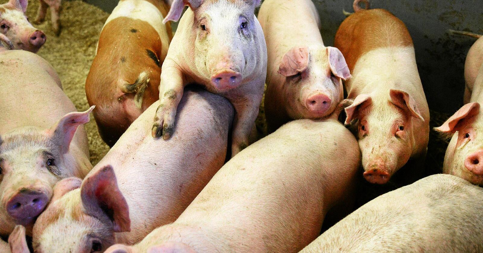 Forskere har sett på hvem vi stoler på når vi får informasjon om dyrevelferd. Foto: Siri Juell Rasmussen.