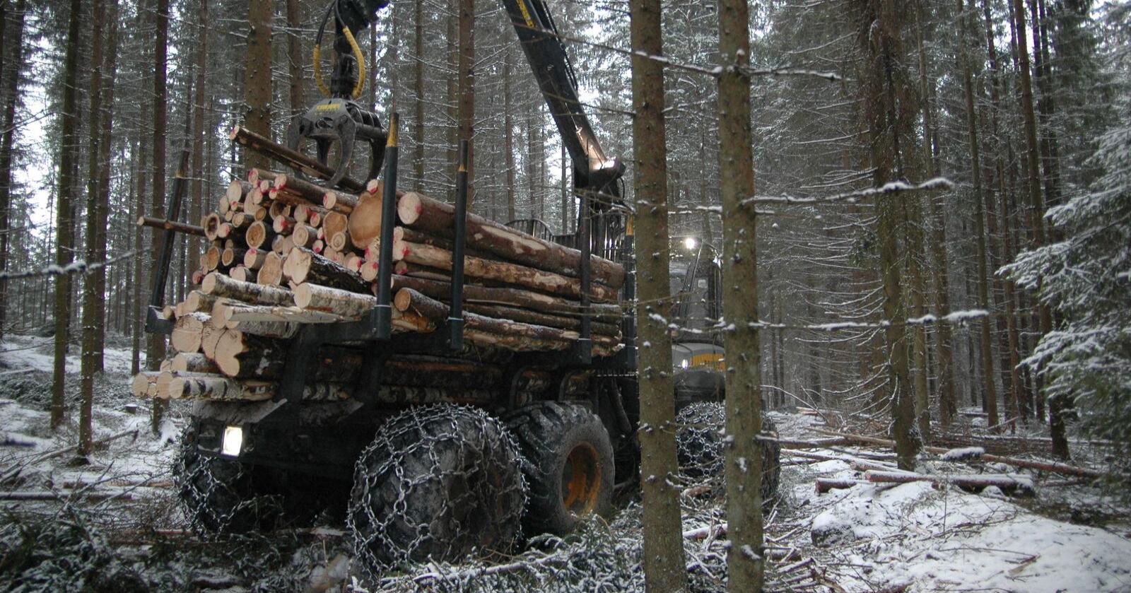 GREP: Skogbruket tar tak og vil finne ut hvorfor kvinner ikke blir i næringa etter endt utdanning. Arkivfoto: Bondebladet
