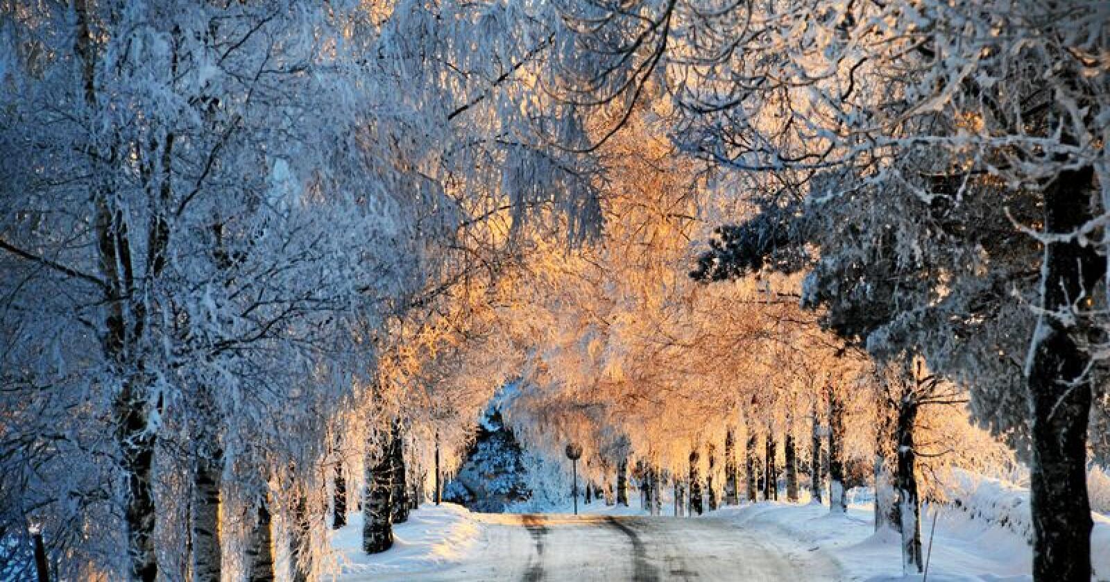 Norge er et annerledesland, med spredt bosetting, næringsutvikling og arbeidsplasser over hele landet. De økonomiske forskjellene er fortsatt nokså små. Vi har store muligheter for å skape gode liv over hele landet. Foto: Siri Juell Rasmussen
