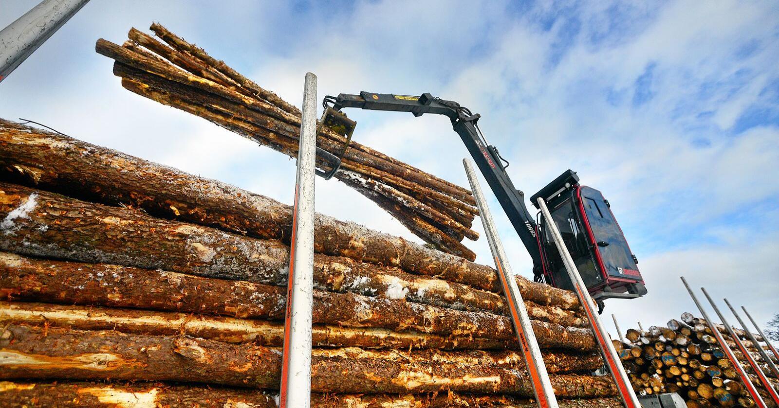 Prisene på sagtømmer er økende, opplyser skogeiersamvirkene. Foto: Siri Juell Rasmussen