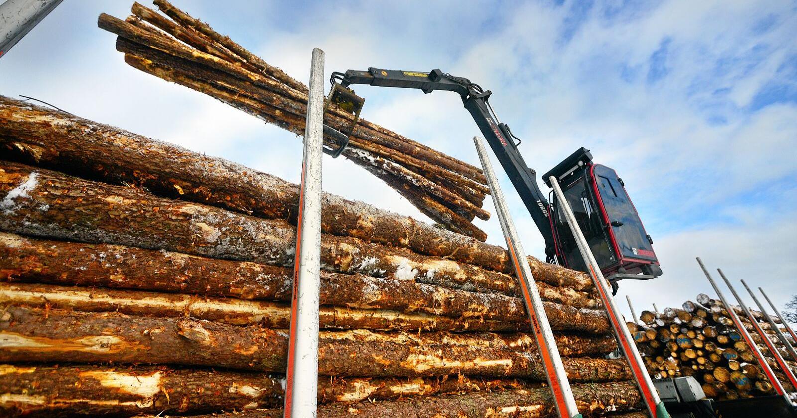 Skogeierforbundet frykter for konsekvensene dersom skogbruket blir fjernet over listen over bærekraftige investeringer av EU. Foto: Siri Juell Rasmussen
