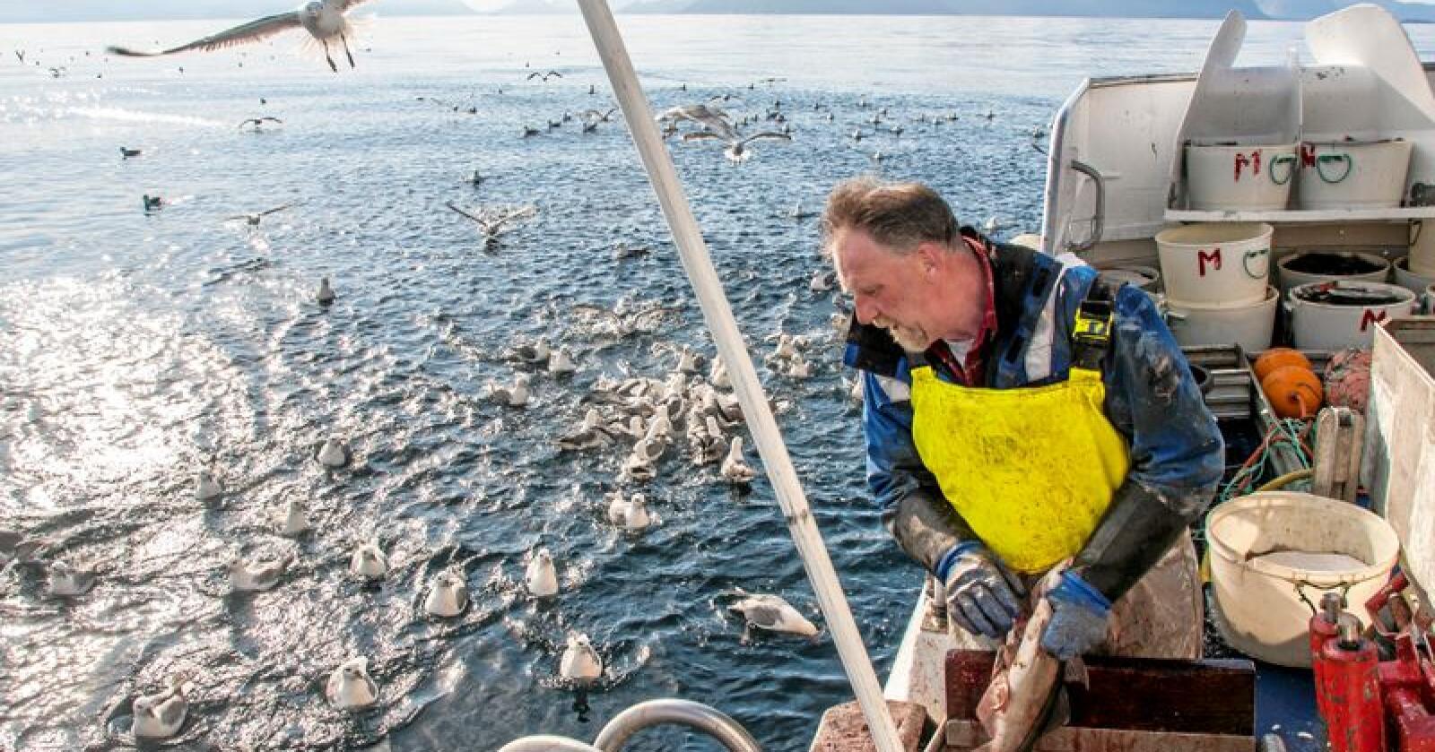 Fisk: EØS-avtalen er ingen forutsetning for norsk eksport av fisk, skriver innsenderen. Foto: Jan-Morten Bjørnbakk/NTB scanpix
