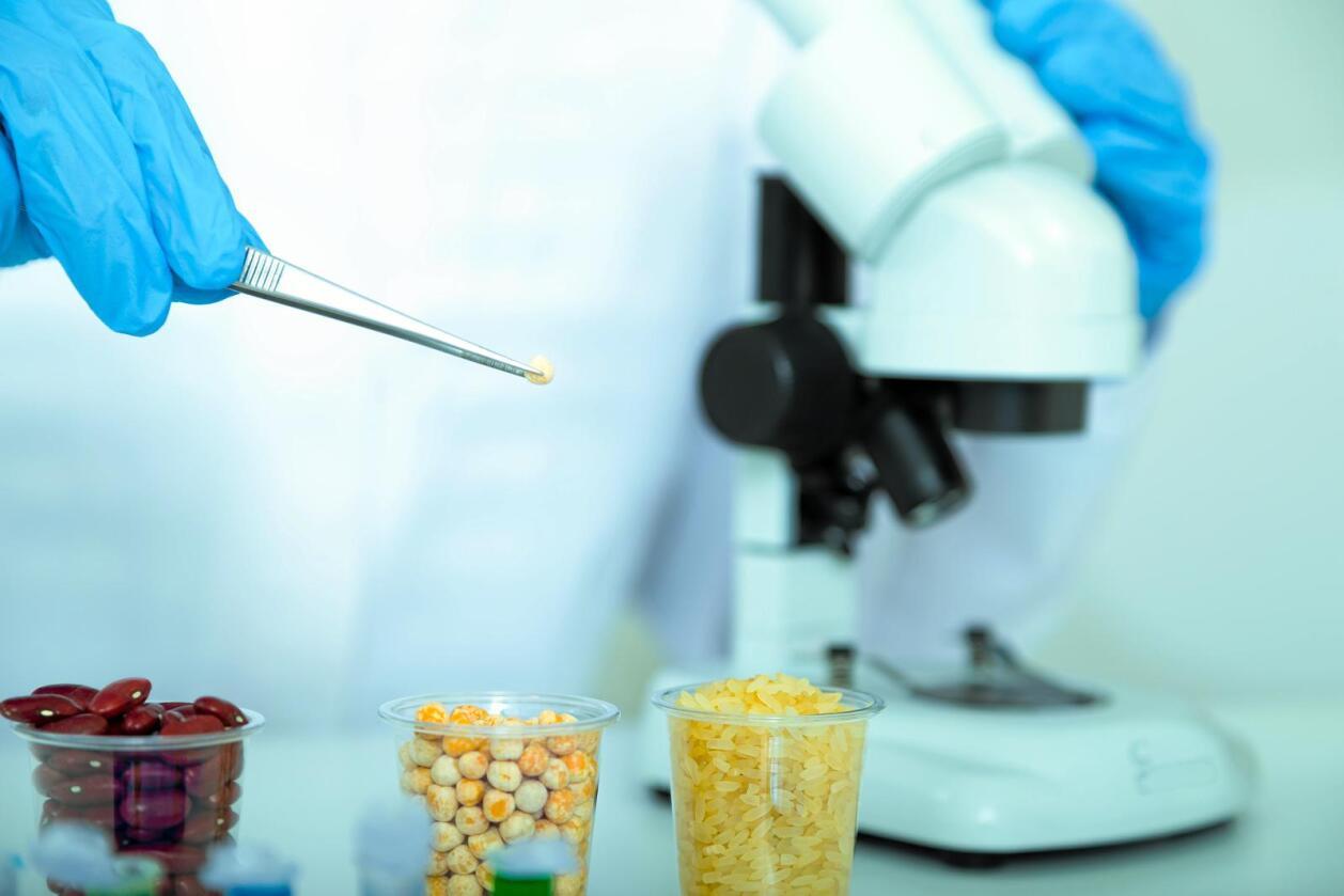GMO: Om en organisme etter loven er å anse som en GMO eller ikke i Norge, avgjøres av definisjonen loven gir av GMO. Foto: Colourbox