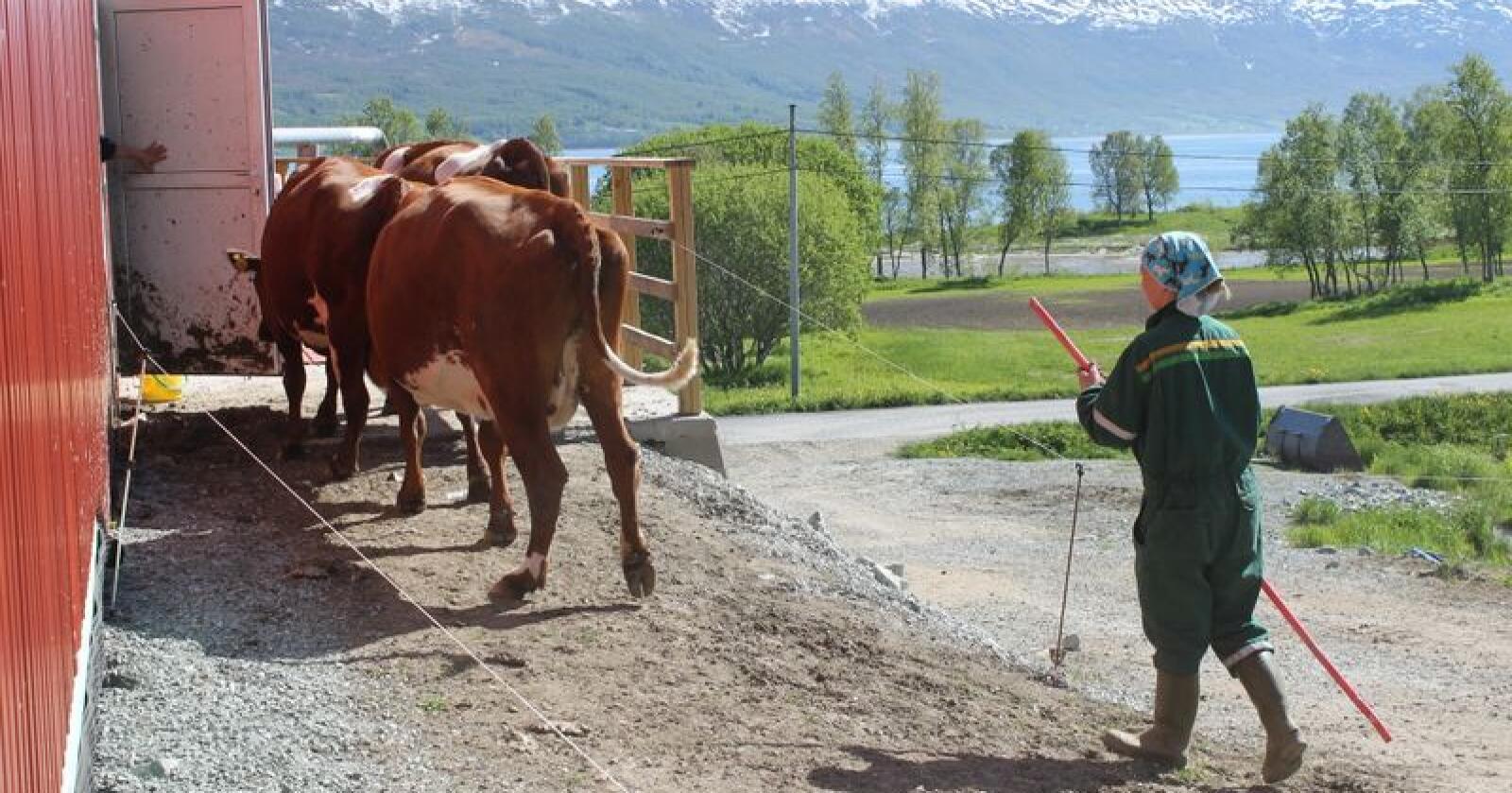 Tilskudd landbruk 2020