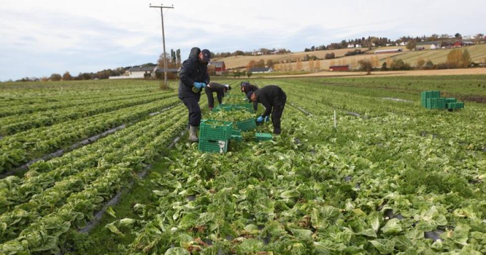 Stor betydning: Grøntsektoren står for 12 prosent av verdiskapningen i landbruket. - Næringen blir mer og mer viktig, sier Harald Oskar Buttedahl. (Foto: Stian Eide)