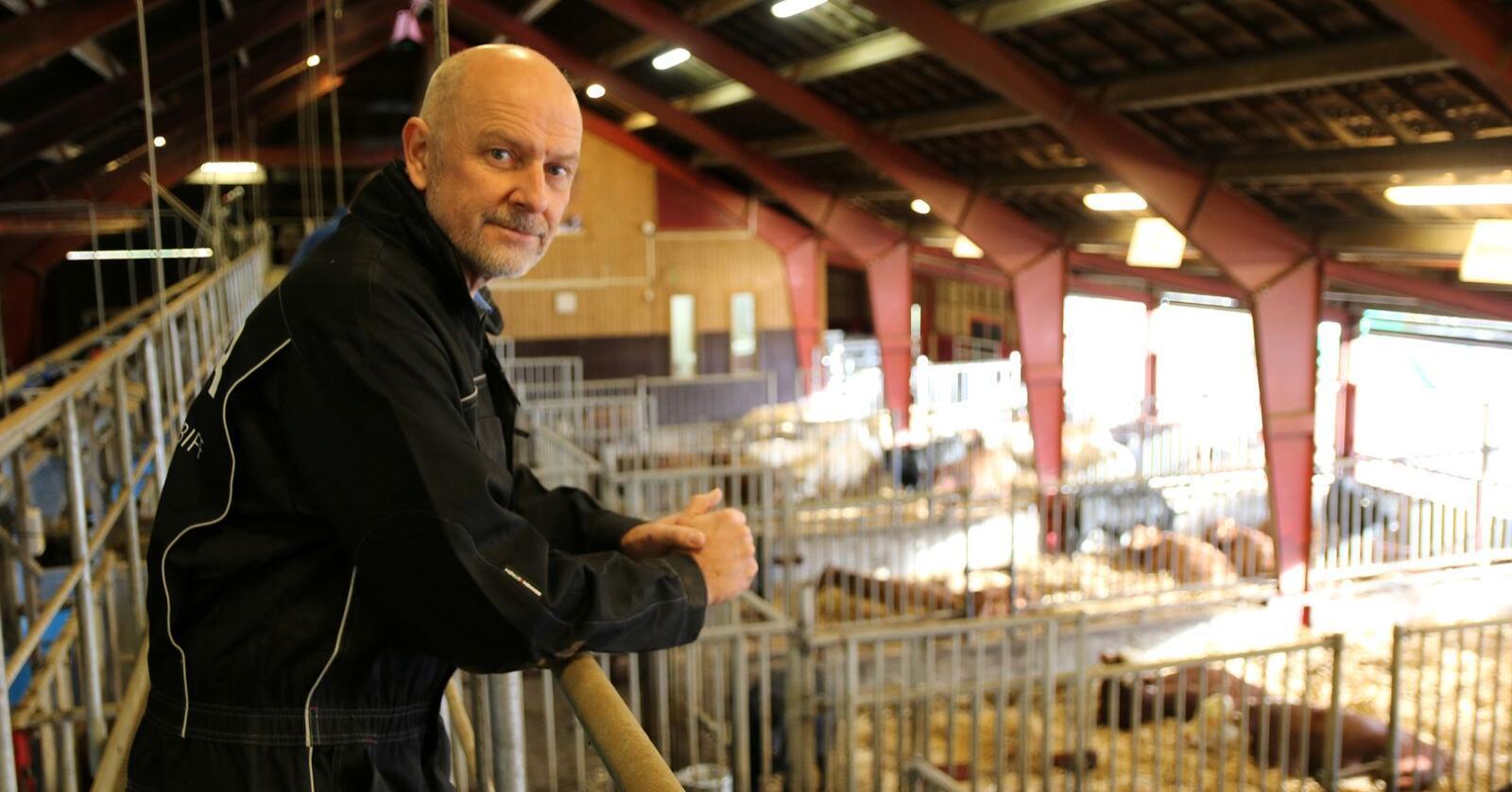 ØKONOMI: Det må gjøres noe med økonomien i ammekuproduksjon for å få flere som slutter med melk til å satse på kjøttfe, mener Per-Sigve Lien, som er daglig leder i Tyr. Foto: Dag Idar Jøsang