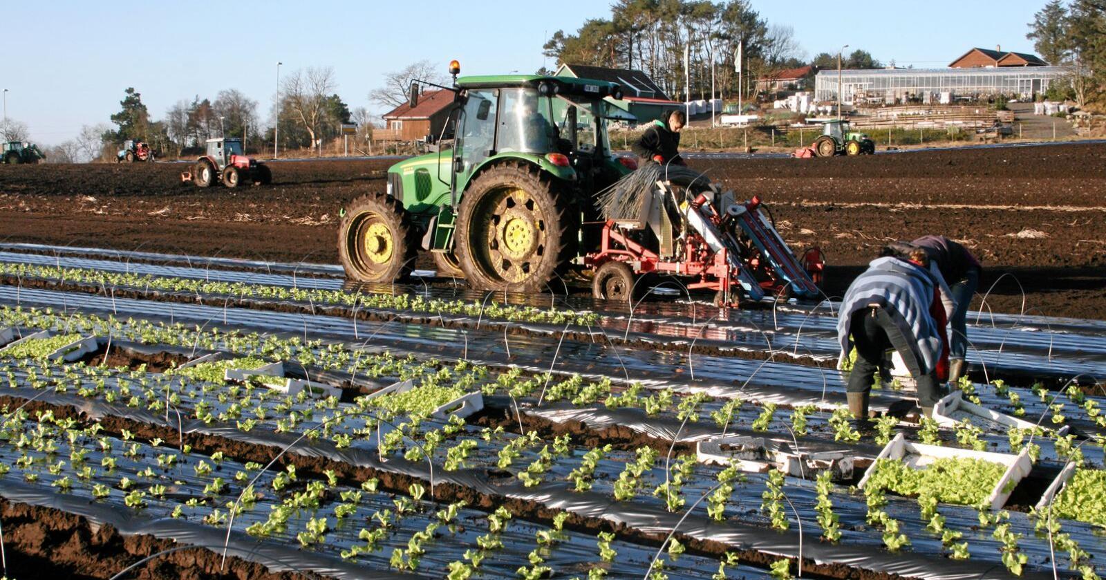 Dersom vi skal kunne produsere den maten vi som land har forutsetning for å lage, må vi evne å engasjere arbeidskraften som finnes i vårt eget land, skriver Sp-politiker Chase Alexander Jordal. Foto. Bjarne Bekkeheien Aase