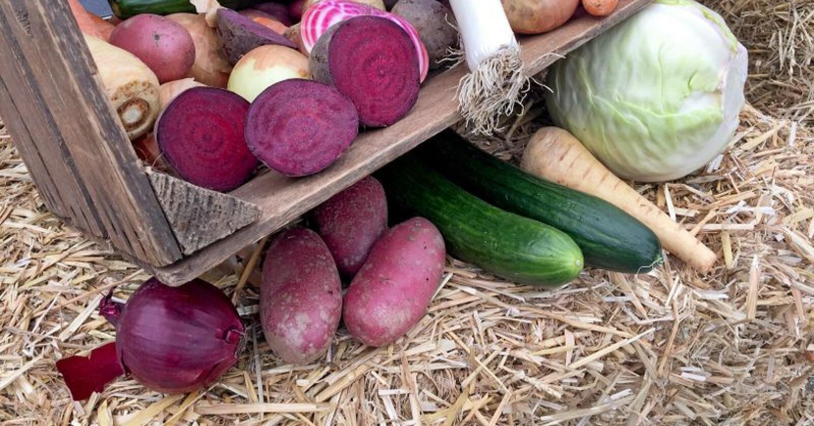 Lagerbeholdningen for en del norske grønnsaker er langt mindre enn de var i januar 2018. Foto: Marianne Tvete