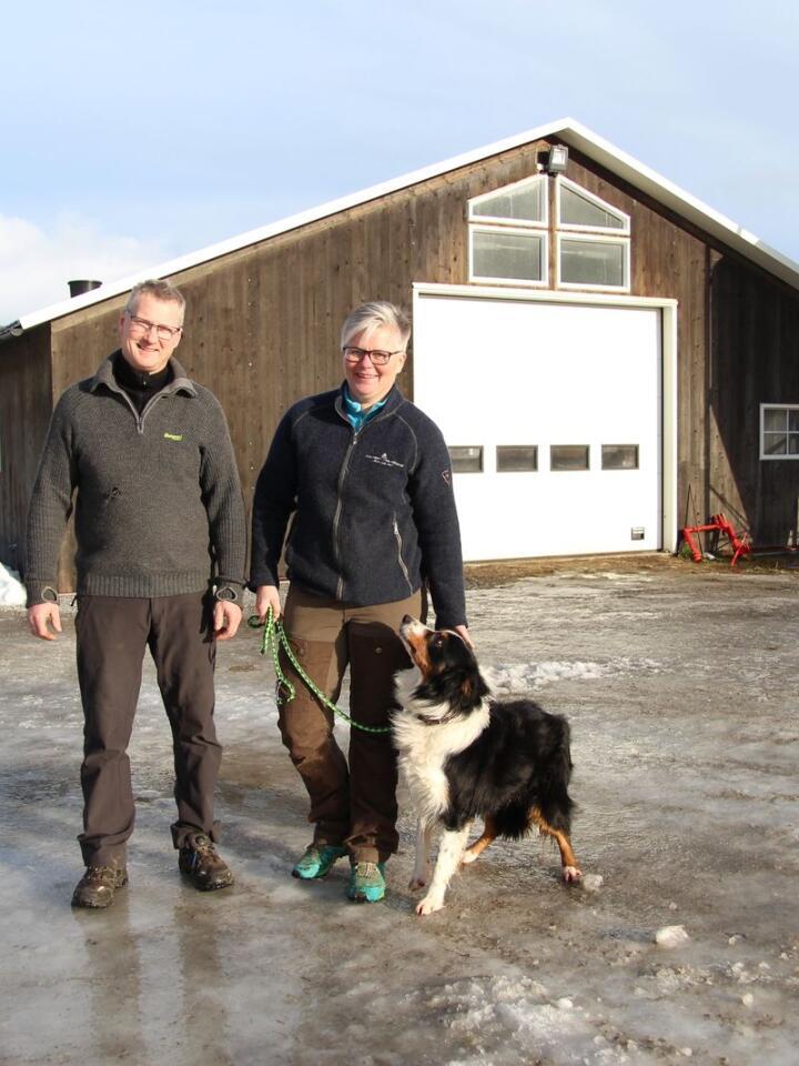 NOK Å GJØRE: Guro Libjå og Jan Erik Blessum Johannessen fra Fyresdal i Telemark har nesten 300 sauer i et tre år gammelt fjøs. I tida mellom paring og lamming har de nok å gjøre med å legge en slagplan for resten av året.