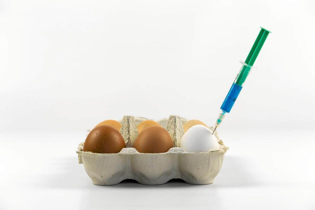 Giftig stoff: Det giftige stoffet fipronil har vorte funne egg og hønekjøtt i (minst) 19 land, sjølv om det er ulovleg å bruke det i husdyrproduksjon. Foto: Colourbox
