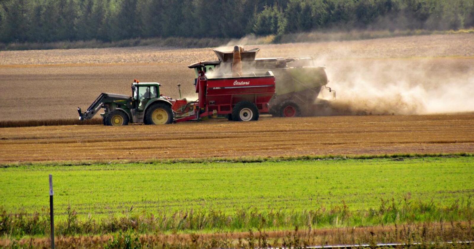 Sverige har som mål å øke den svenske matproduksjonen fram mot 2030. – Jeg vet ikke om det blir vellykket. Men de skal komme med tiltak, sier Torbjørn Tufte. (Foto: Pia Nyman/Mostphotos)