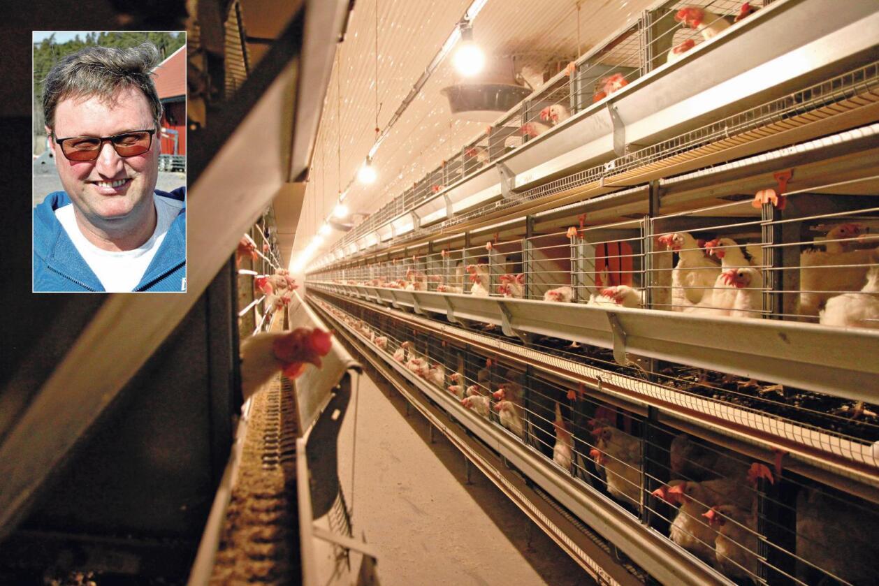 Ikke øverst på harryhandel-lista: – Folk kjøper nesten ikke egg når de Harry-handler i Sverige, sier Hans Christtian Kihl. (Foto: Lars Olav Haug)