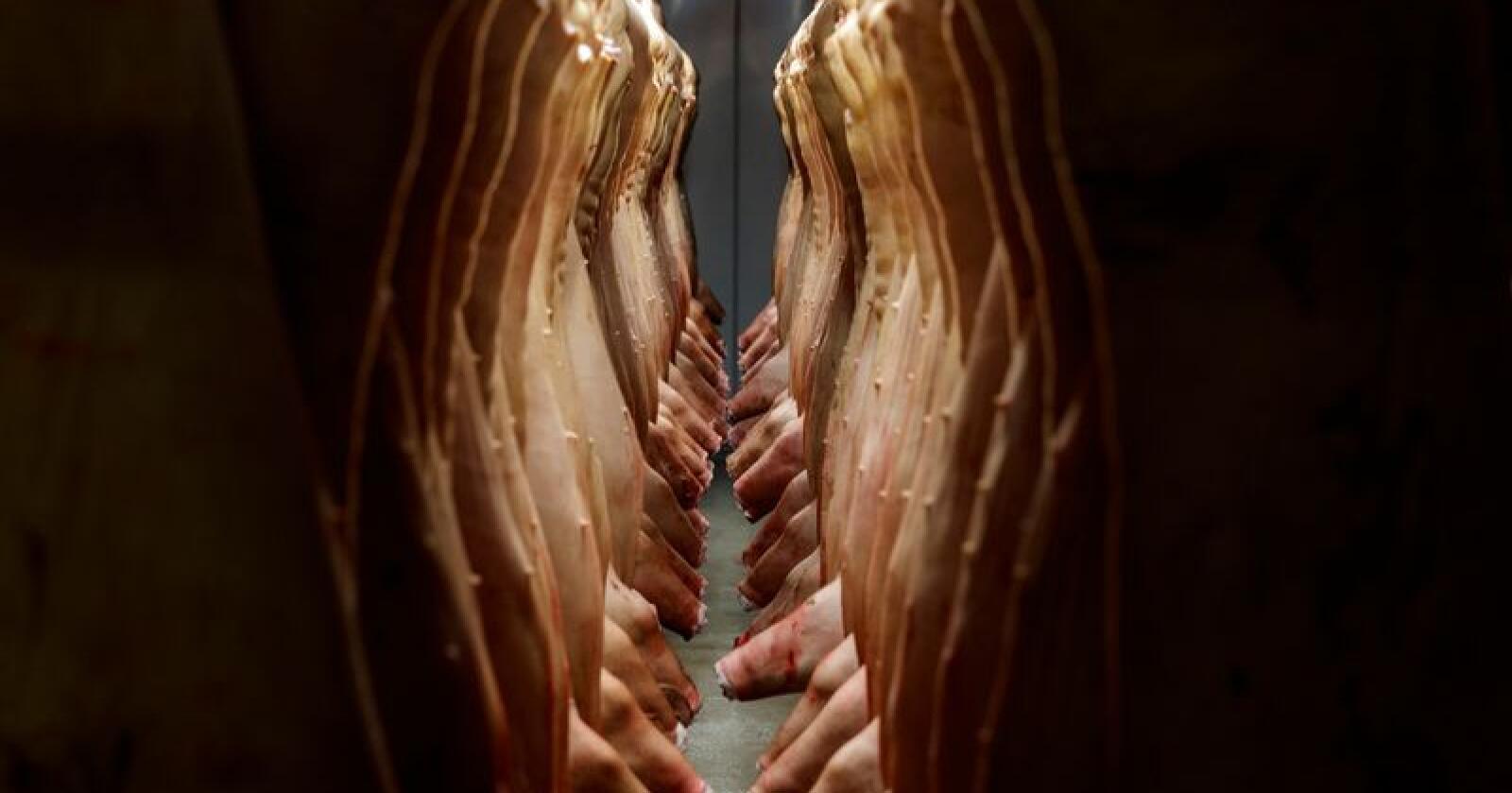 Kameraovervåking på slakterier vil bidra til at forbrukere får et mer realistisk bilde av prosessen for å få kjøtt til butikkene, mener dyrevernsorganisasjonen Noah. Illustrasjonsfoto: Cornelius Poppe / NTB scanpix
