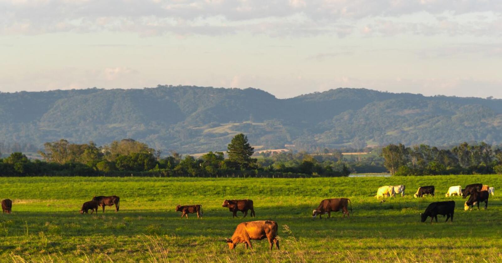 De søramerikanske landene ser for seg økt markedstilgang i Europa for sin produksjon av landbruksvarer. Foto: Mostphotos