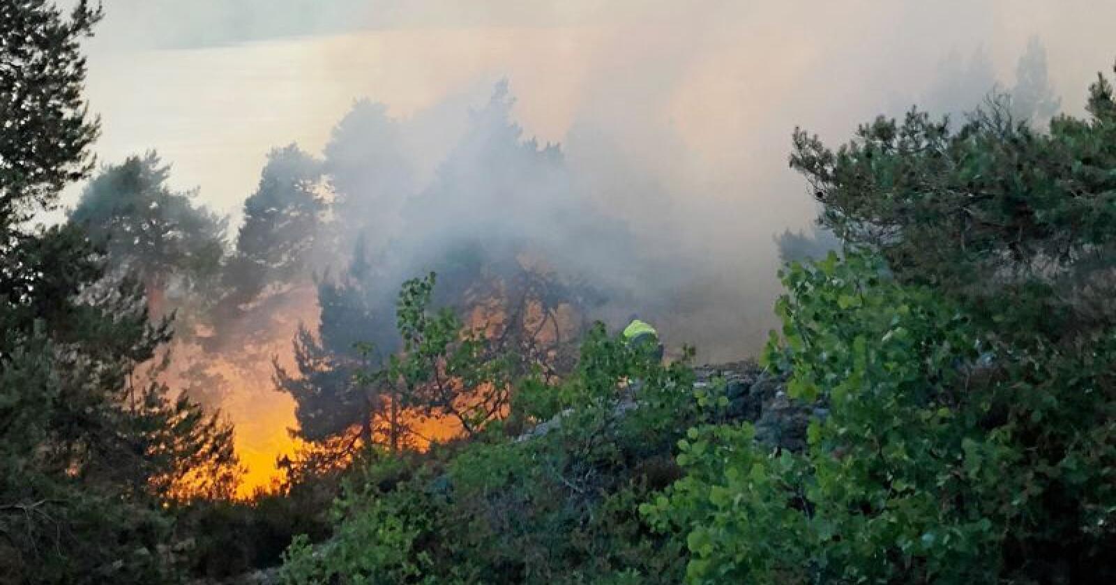 Med varmere klima vil det bli flere skogbranner. Foto: Tor Aage Hansen / NTB scanpix