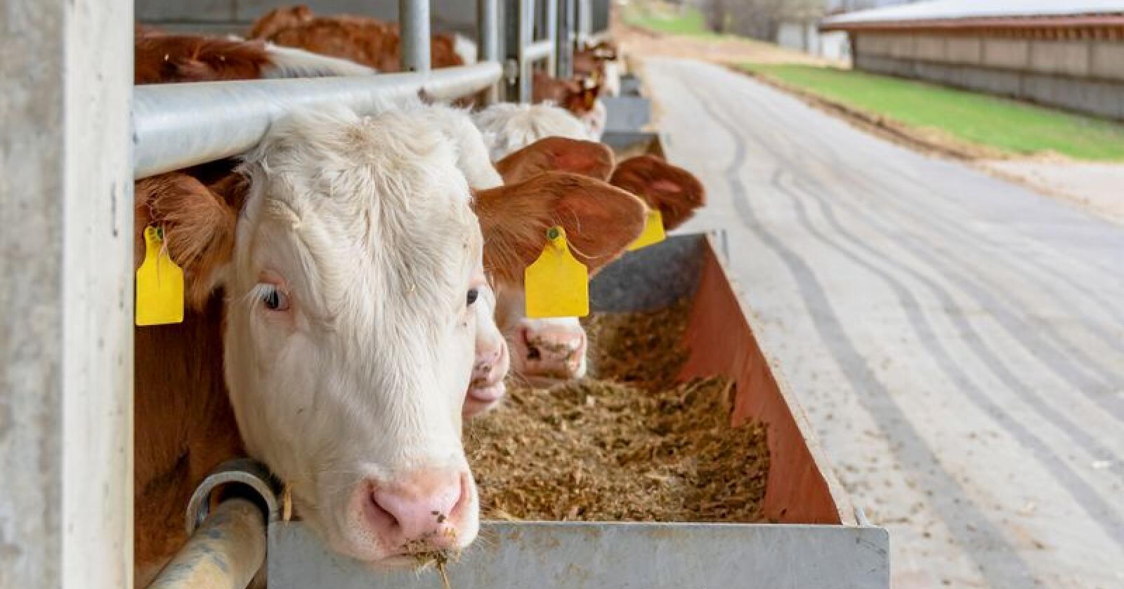 EUs landbrukspolitikk får kritikk for å vere for lite klimavenleg i ny rapport. Foto: Mostphotos