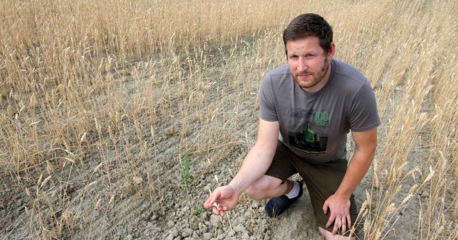 Lågast jordbruksinntekt hadde korn med negativ inntekt på minus 84000 kroner per årsverk. Even Kristian Mangerud på Romerike var ein av mange kornbønder med svært dårlege avlingar i 2018. (Foto: Glen Widing)