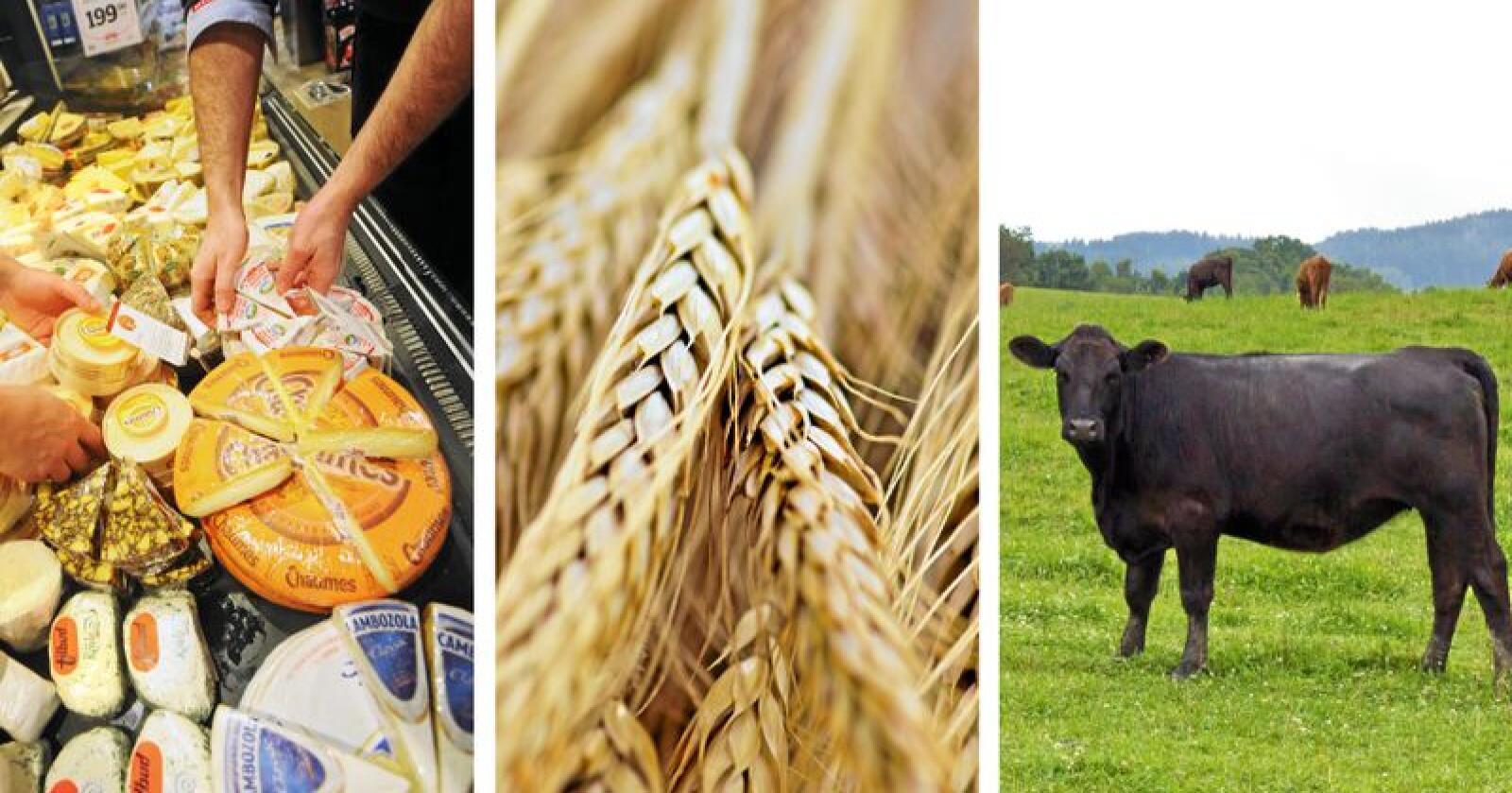Importen har økt betraktelig de siste årene. I 2018 økte importen av ost og korn stort, kjøtt gikk noe ned på grunn av fôrsituasjon og økt slakting. Foto: Juell Rasmussen / Mostphotos