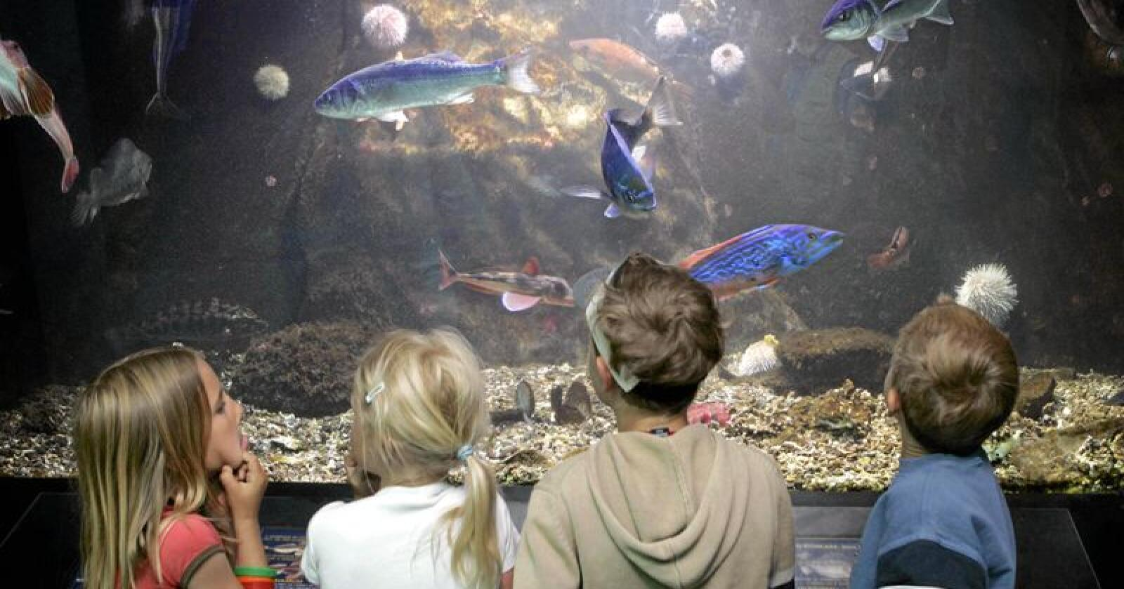 Skapninger: Forestillingen om at fisk er primitive og dumme skapninger stemmer ikke. Foto Knut Falch/NTB scanpix