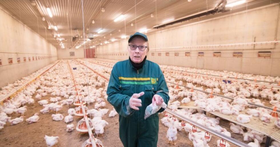Kyllingprodusent i Holmestrand Gro Howlid Aschehoug (74) sendte en Salmonellaprøve med Posten til Veterinærinstituttet i Sandnes. Da den kom fra var den for gammel til og brukes. Foto: Vidar Sandnes