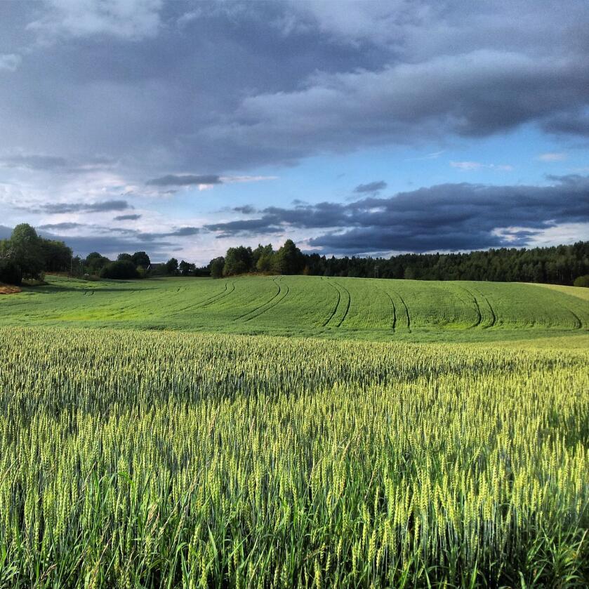 Nytt verktøy: Korn skal produseres på kornjord, grønnsaker på grønnsakjord og gras på grasjord. Og så skal det selvfølgelig være rom for vekstskifte, uten å tape tilskudd, skriver innsenderen. Foto: Mostphotos