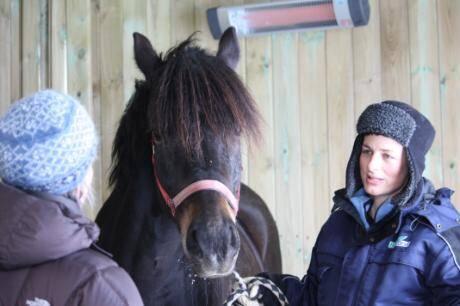Hestens valg: 16 hester på Alstadhaug gård kan under ulike værforhold velge mellom å stå ute, å gå inn i et rom med varmelampe, eller å gå inn i et rom uten varmelampe. Forskere i Bioforsk registrerer hestens atferd og oppholdssted. Foto: Bioforsk