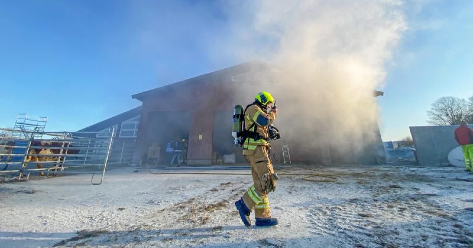 Brannøvelse i fjøset: De siste årene har antall husdyrbranner gått ned. Her fra en brannøvelse på Mære landbruksskole i Steinkjer. Alle foto: Håvard Zeiner