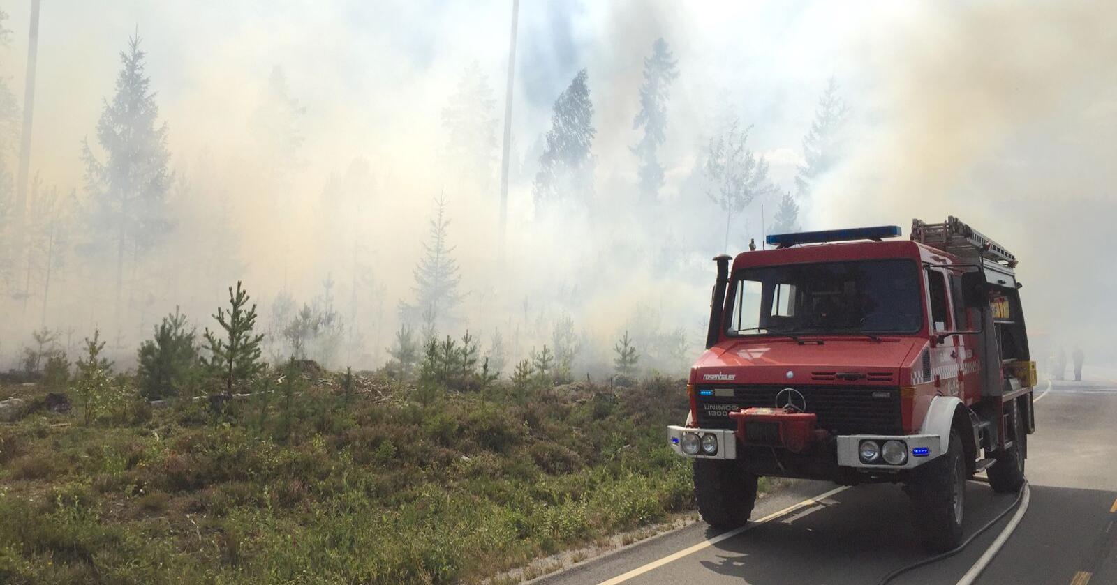 Norge må belage seg på flere skogbranner i framtida som følge av klimaendringer. Foto: Ole-Johnny Myhrvold / Glåmdalen / NTB