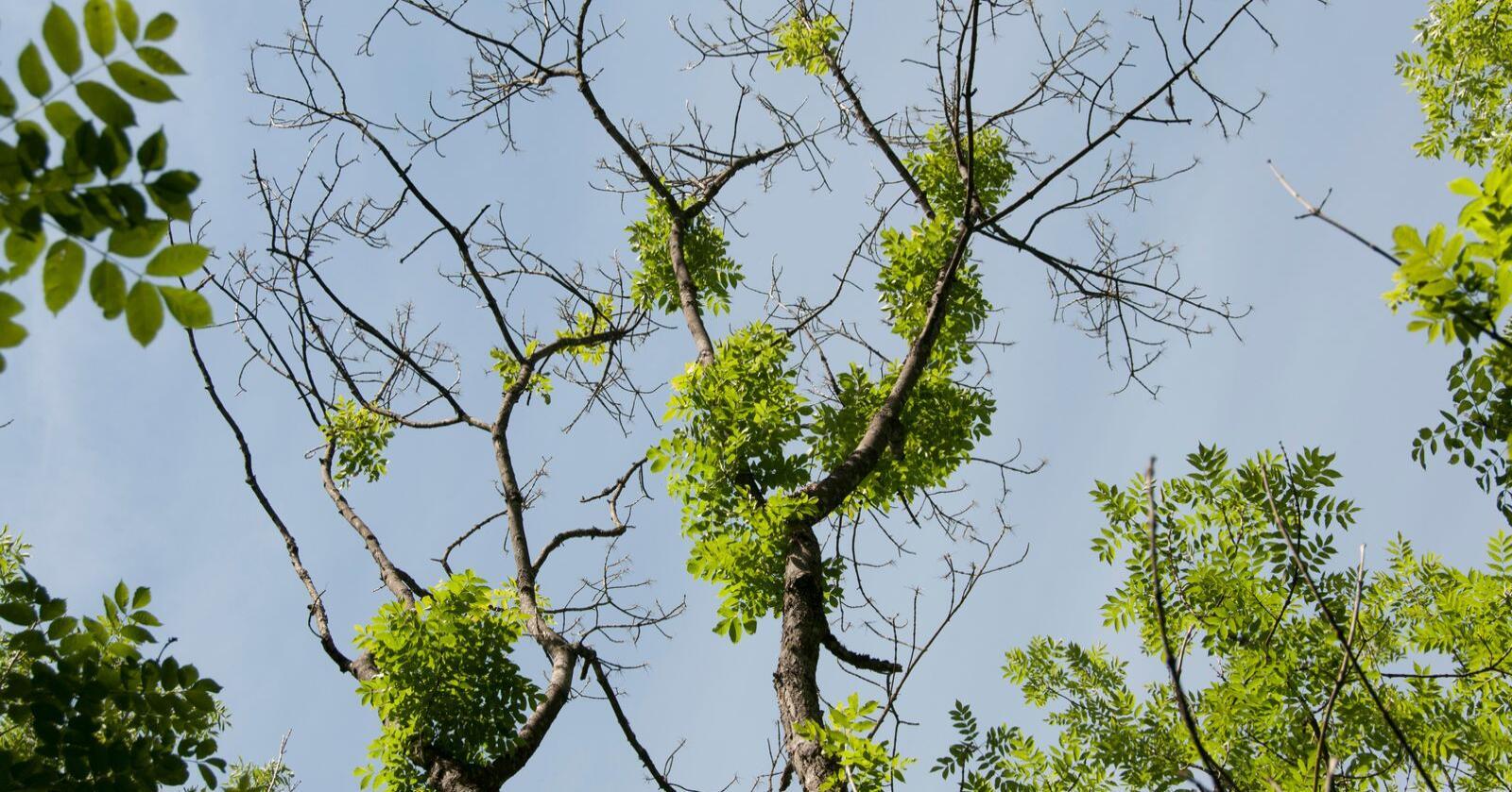 2020 vil være et nøkkelår for biodiversitet/biomangfold, mener EU-parlamentet, som torsdag vedtok mer forpliktende mål for dette politikkområdet. Foto: Volkmar Timmermann/Skog og land